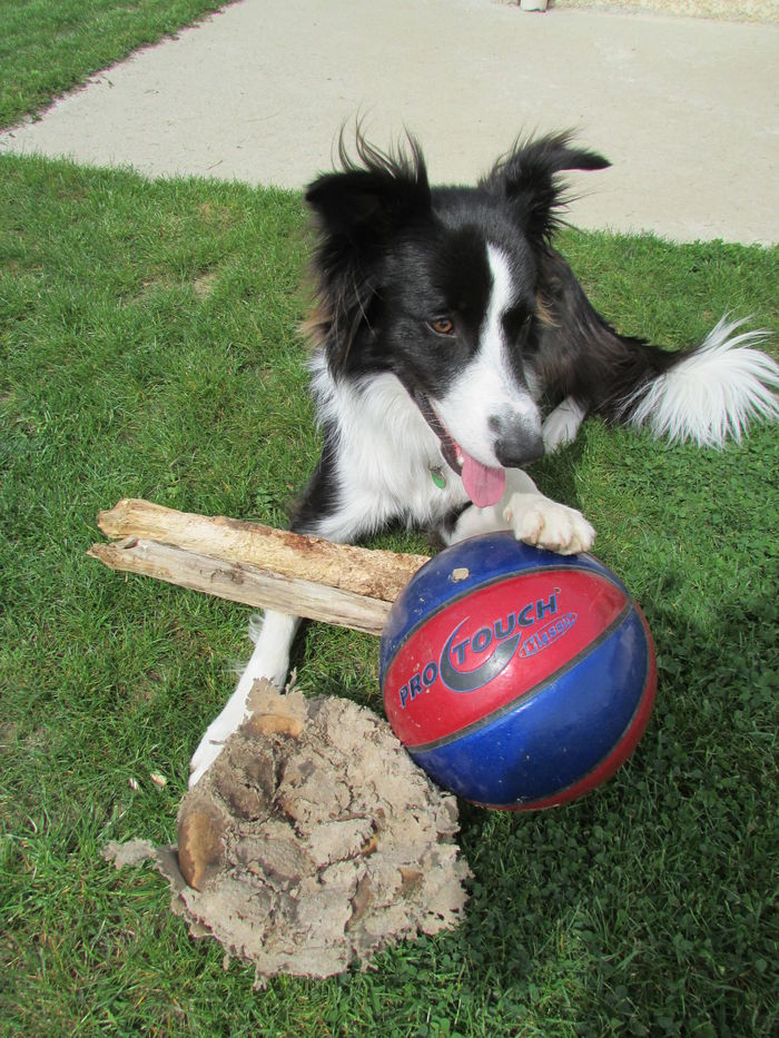 vous voyez mon ballon est comme neuf je ne l 'abime pas !! interdit