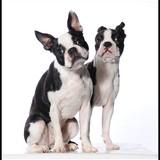 Lola et Higgy
