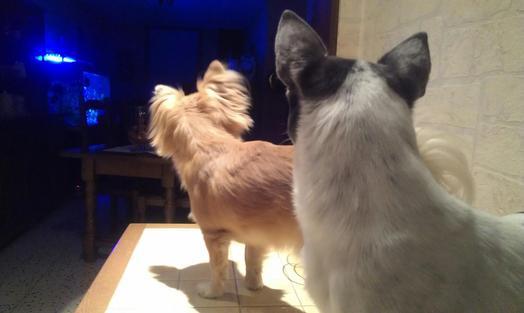 Billy & Yoshi