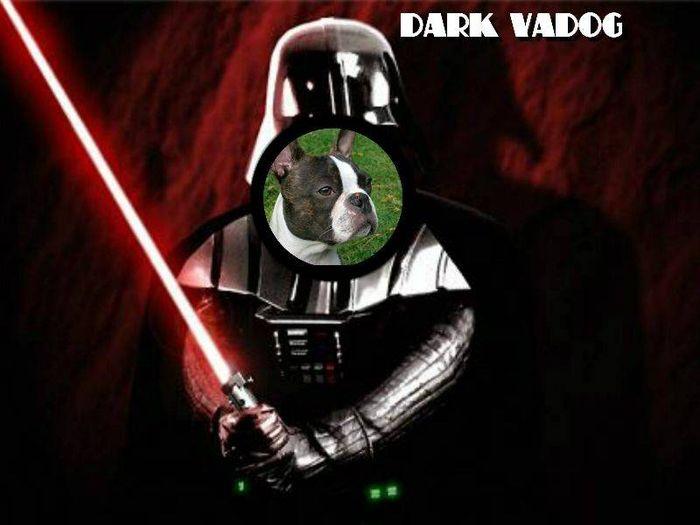 Pour Dog Vador
