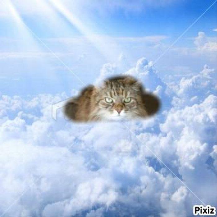 Pour ma super amie Va'a, je ne t'oublierai pas, et penserai à toi en levant mon regard vers le ciel.