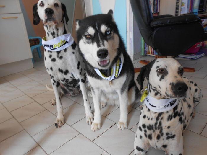 Isis, Iéna, et Bijoux, avec des bandanas yp :)