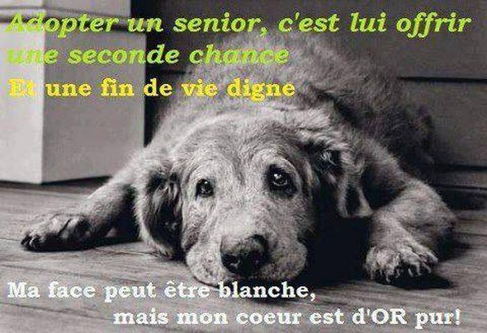 adoptez un vieux chien pour lui rendre une fin de vie heureuse