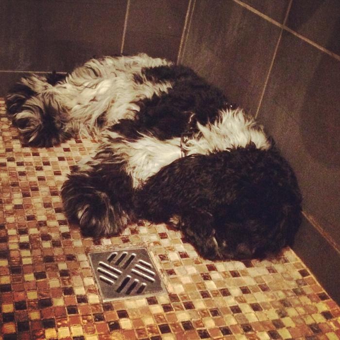 Je dors dans la douche !! #tropchaud