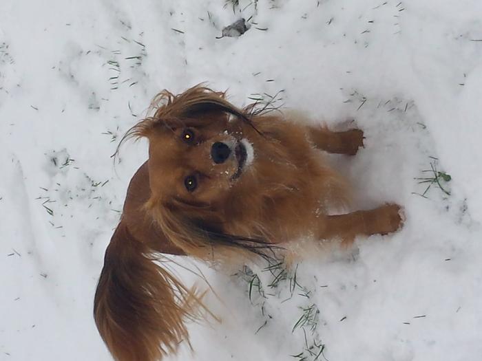 j adoreee la neige