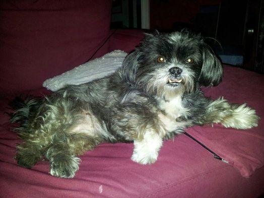 mimiko sur le canap?