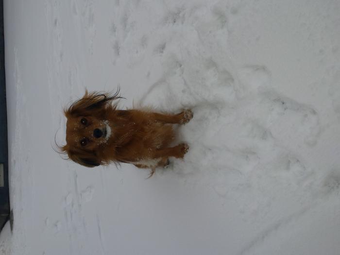 a la neige