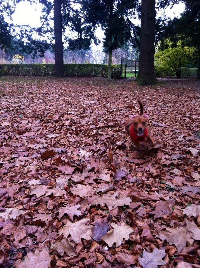 J'adore courir dans les feuilles!! Waf