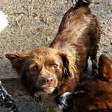 sauver les chiens de la fourrière a Pascanie