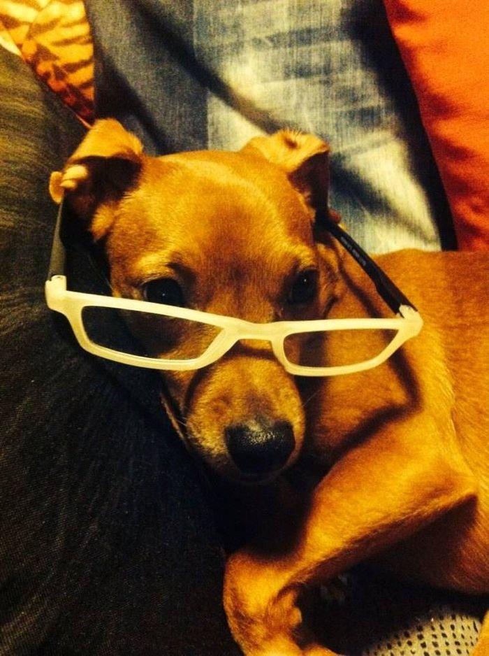 ma chienne est une intello!!