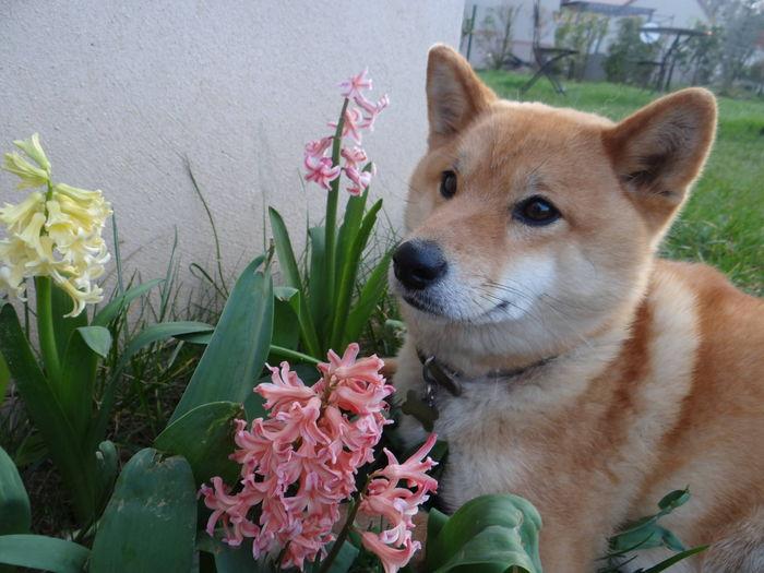 Les fleurs, le printemps, yes l'arrivée de l'été !