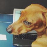 Pets blogueiros