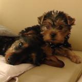 Jalna & Lola
