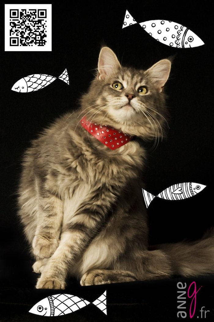 Joyeux 1er Avril à mes amis les chats !!! ;-)