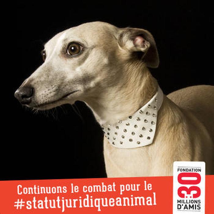 Vous aussi mobilisez-vous avec @30millionsdamis pour le #statutjuridiqueanimal en envoyant la photo sur http://goo.gl/Ox76Cb