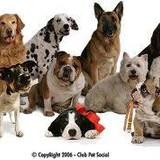 Tudo sobre cães