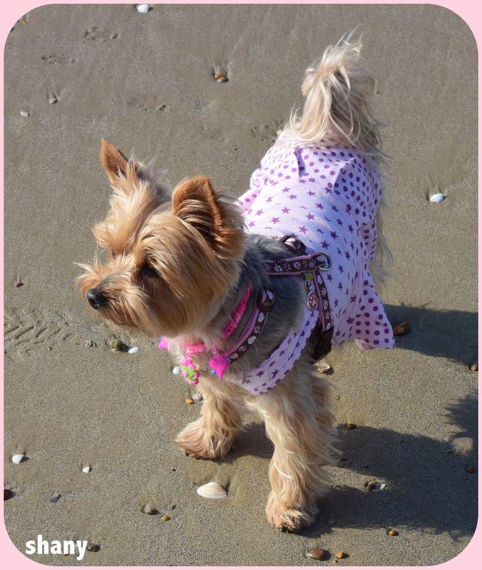 ❤ tout les matins j'adore courir sur la plage..