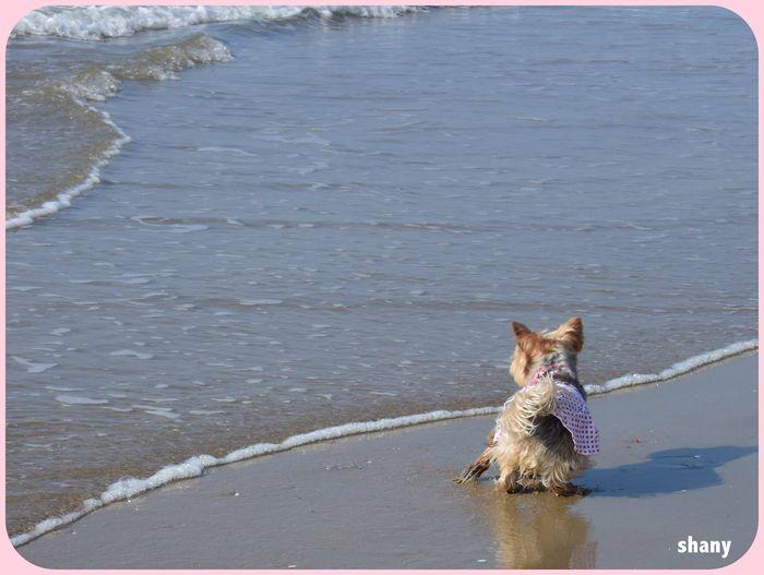 ❤  je surveille les vagues… cela m'amuse trop bien..