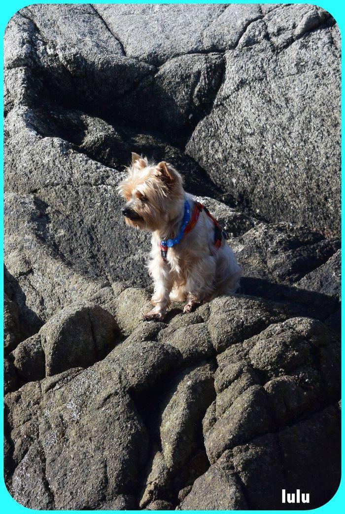 ❤ j'adore grimper sur les rochers.