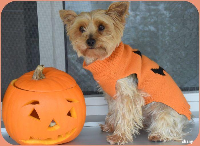 ❤ la citrouille après l'avoir dégusté .. vive Halloween..!!