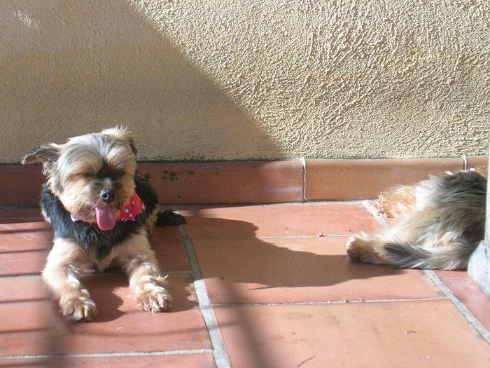 Bo et Sweetie