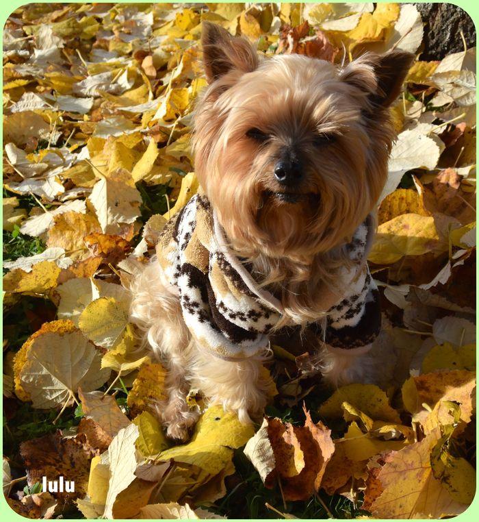 ❤️ les feuilles d'automne
