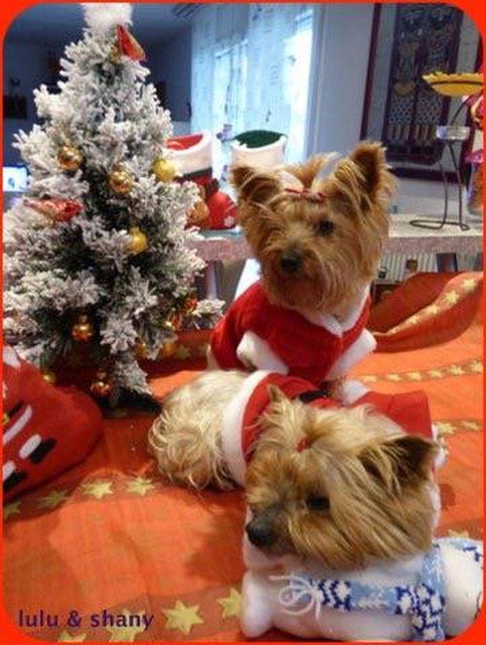 ❤️ j'ai fêté Noël en famille aujourd'hui