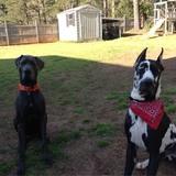Cooper and Zeus