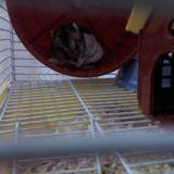 bily - Hamster