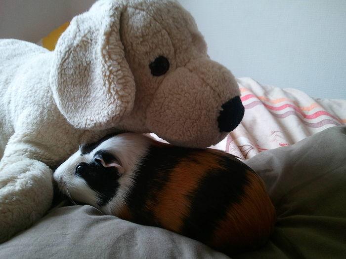 Pause câlin avec mon gros chien