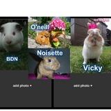 Journée de l'amitié lapins&co ♥