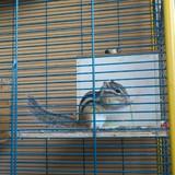 Mes Ecureuils