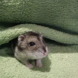 La team des Hamsters Tout Mignon