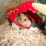 Eldanar's Hamsterworld