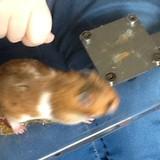 Moss - Hamster