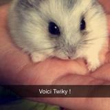 Twiky