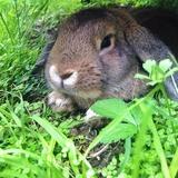 Moment de détente dans le jardin :-)