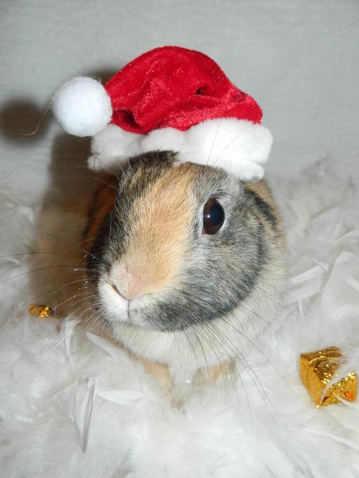 Bonne fêtes de fin d'année et joyeux noel à tous ! ♥