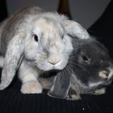 Bob et Lili