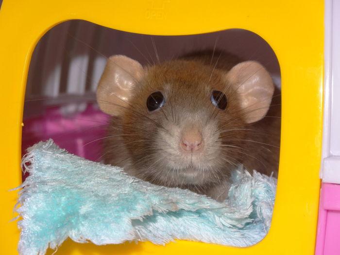 Miss belles oreilles ♥
