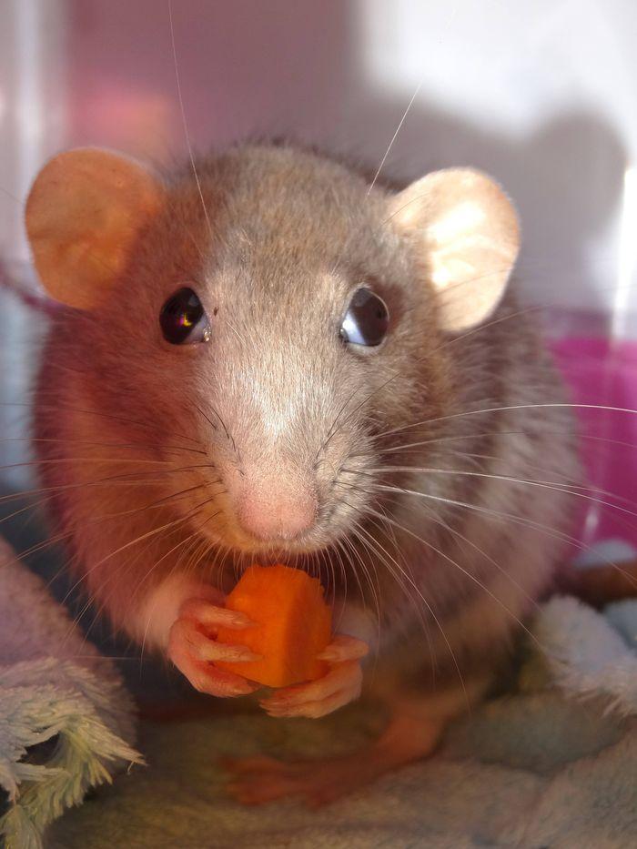 Hum carotte ! ♥