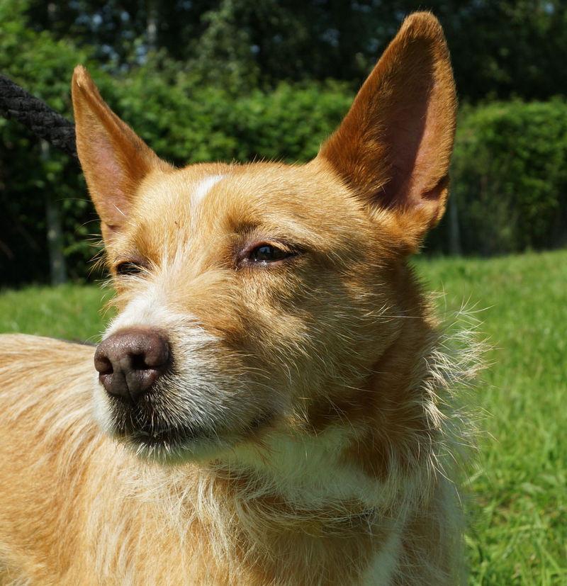 divine chien adopter refuge spa d 39 orgeval annonces gratuites d 39 animaux orgeval yummypets. Black Bedroom Furniture Sets. Home Design Ideas