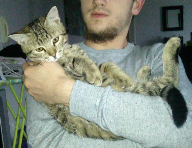 Yummypets annonces d 39 animaux gratuites - Couper les griffes d un chaton de 2 mois ...
