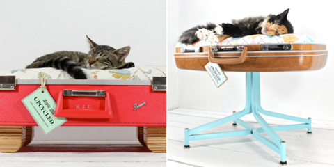 do it yourself un panier pour chien et chat dans une valise yummypets. Black Bedroom Furniture Sets. Home Design Ideas
