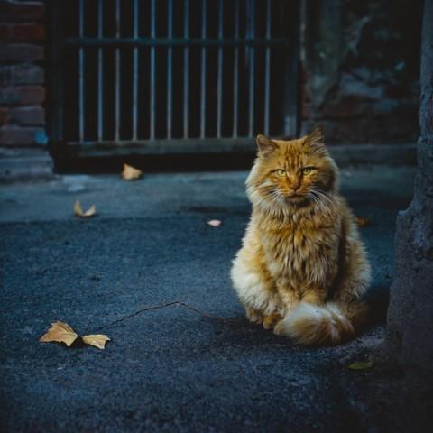 De fabuleuses histoires de chats perdus