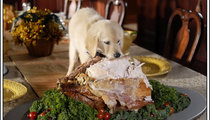 Holiday dangers to pets