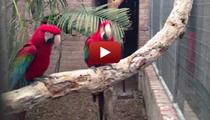 Parrots love Waka Flocka Flame