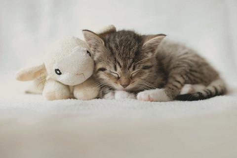 Tumblr lxniint8zo1qd4q01o1 500 large - Jeux d animaux trop mignon ...