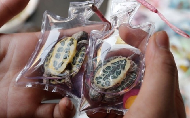 Live animals being sold as key-rings in China!