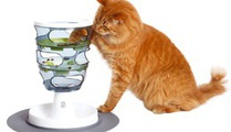 How to combine sports and digestion for your cat?